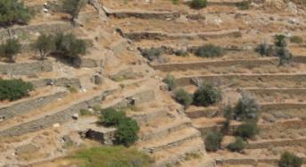 Life Terracescape: Επανακαλλιέργεια των αιμασιών της Άνδρου μέσα από την δημιουργία ΚοινΣΕπ