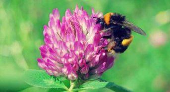 8 εκατ. ευρώ για την ενίσχυση της μελισσοκομίας