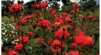 Flower Power: Άτομα με νοητική αναπηρία καλλιεργούν φυτά και λουλούδια σ' ένα κτήμα στον Μαραθώνα