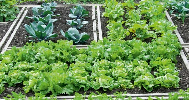 """Αστικοί λαχανόκηποι: γινόμαστε """"Κηπουροί στην πόλη"""""""