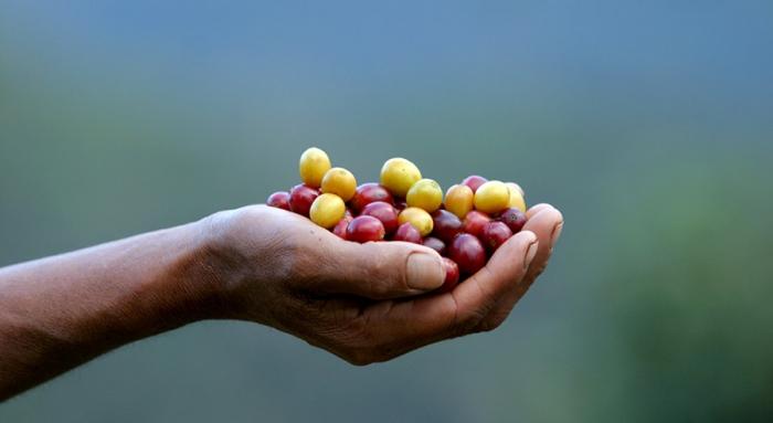 Πώς μπορώ να δημιουργήσω μία πετυχημένη Αγροδιατροφική Επιχείρηση;