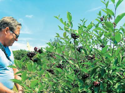 Καλό εισόδημα από δέκα άγνωστες καλλιέργειες