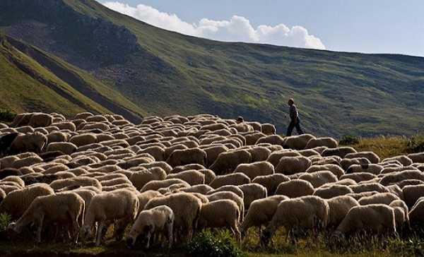 ΚΟΙΝΣΕΠ στις Πρέσπες αναβιώνει παλιές πρακτικές γεωργίας και κτηνοτροφίας