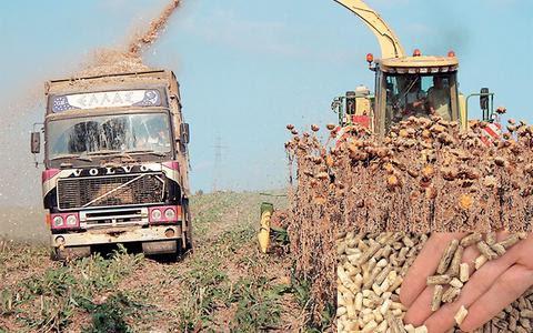 Καλλιέργεια αγριαγκινάρας προοπτική για κάλο εισόδημα