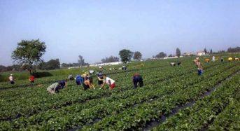 Διευκρινίσεις για τον τρόπο αμοιβής των εργατών γης που απασχολούνται σε ΚοινΣΕπ